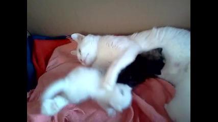 Мама с нейните котенца