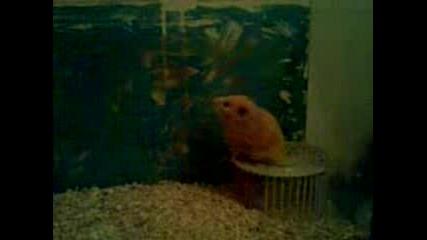 Hamster Haus