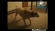 Куче Сънува Кошмари