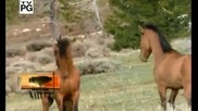 Pbs Nature - Cloud, Wild Stallion of the Rockies (2001)