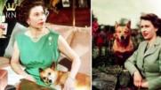Любимите кучета на кралицата