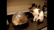 Котка я е страх от пукане на пуканки