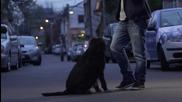 Neda Ukraden 2014 - Zovite svirace oficial Hd video- Prevod