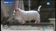 Може ли куче да прилича на Хитлер?