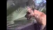 Случки С Кучета