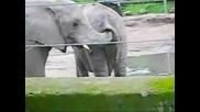 Много Палави Слончета