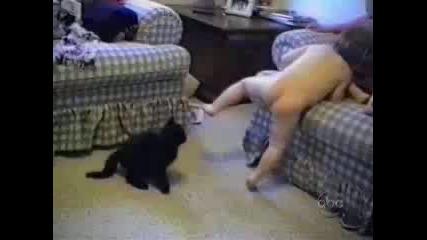 Смях с котки