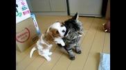 Сладко кученце се опитва да си играе с мързелив котарак