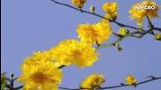 Красиви разцъфващи пролетни цветя