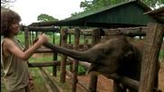 Слонове, Шри Ланка - Оцеляване