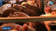 БУНТ: Животновъди се обявиха срещу избиването на животни заради чума