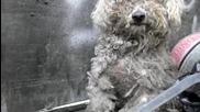 Хора вземат да отглеждат у дома си сляпо куче, което е оставено на боклука
