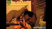 Гола котка се радва на коса