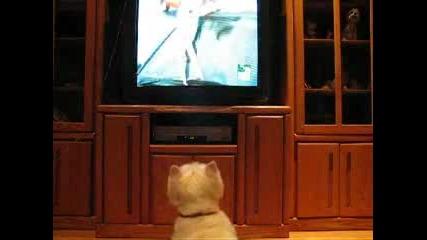 Куче Гледа Animal Planet