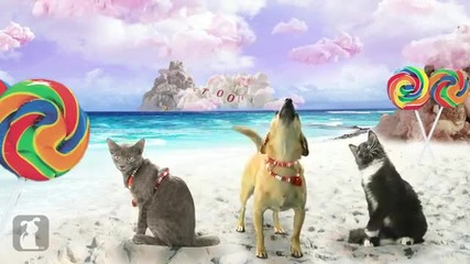 Katy Perry - California Gurls (ft Snoop Dog) - Katy Puppy - California Grrrs _ Wide Awoof - Petody