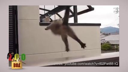 Котките нинджа :P