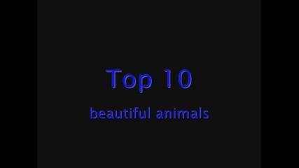 Топ 10 красиви животни