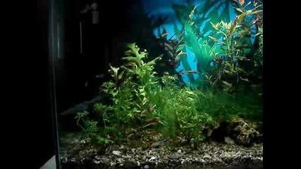 Моят аквариум :)