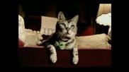Реклама - Гол Котката Танцува