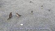 Кат волна птичка - с текст