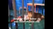 Lion Attacks Man In Cage Uncensored