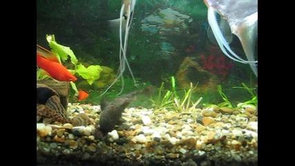 Старият ми аквариум