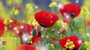Красиви червени цветя!