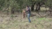 Мъж се сби с кенгуру като в боксов мач, за да спаси кучето си