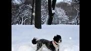 Шаро и Първия сняг*