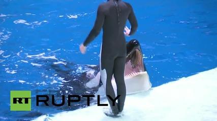 Русия: Путин се наслаждава на шоу с косатки в московски аквариум