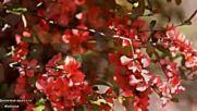Пролетна красота Canon in D - Pachelbel (pretty Girl, Nature Sound)