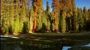 Sunrise Earth - Sequoia Light ( Part 5 / 5 ) * H D *