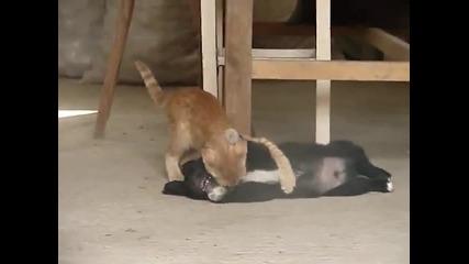 Куче и коте сладко си играят