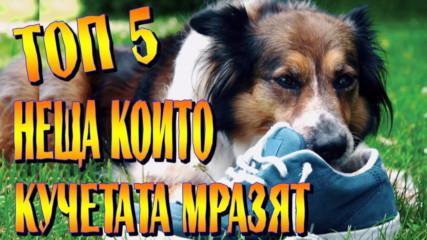 Топ 5 неща, които кучетата мразят