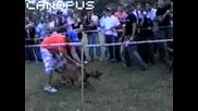A.P.B.A 2007 Събиране На Аmerican Pit Bull