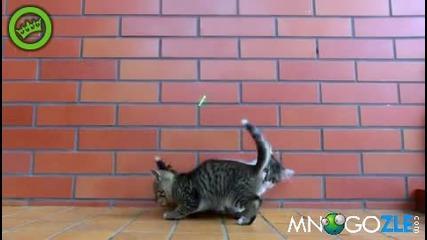 Котешка забавачка с лазер