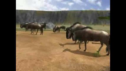 Диви животни на земята !
