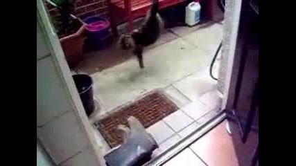 Котка Се Страхува От Ботуши