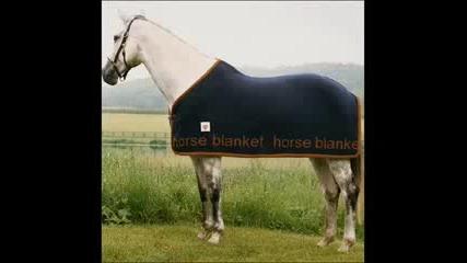 Stop Horse Cruelty!!!