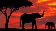 Релакс - Прекрасна африканска музика