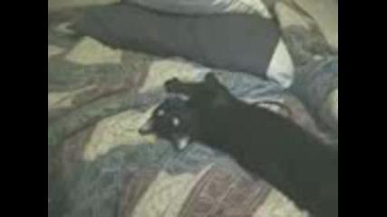 Стопанин Моли Котката Си Да Стане От Дрямка ( 100% Смях )