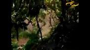 Ishtar - Horchat Hai Caliptus ( + Текст )