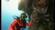 бариереният риф