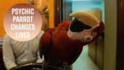 How a psychic parrot became a travel guru