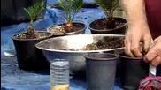 засаждане на растение