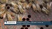 Нидерландски учени обучават пчели да засичат коронавируса