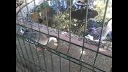 Бобри и патици - Остров Свобода град Пазарджик - 30 август
