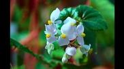 Синьо цвете / Blue Flower - In Ecstasy (tomar Katha Bhebe Mari)