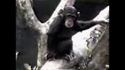 Маймуна умира от миризмата си