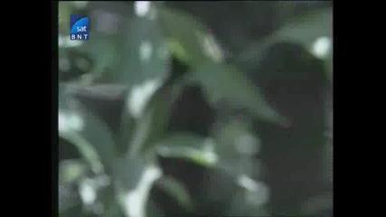 Насаме с пчелите(bg Audio) 14 част
